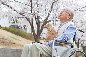 Animal therapy in care homes - a man in a wheelchair in the garden with a dog on his knee