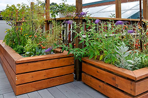 care home garden - raised beds
