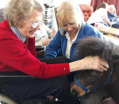 Shetland Ponies with Care Home residents